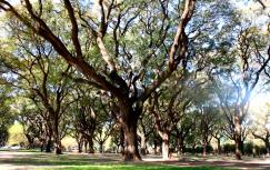 Caminatas CDR:  Campo de Golf Municipal Bosques de Palermo